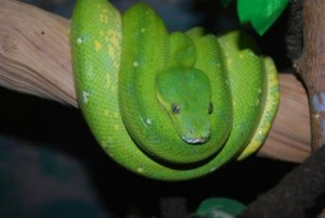 snake vet