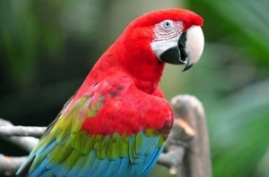 bird care, bird vet mornington peninsula, pet services
