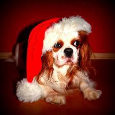 pets for christmas, karingal veterinary hospital, pet adoption, mornington peninsula vet clinic, frankston vet, seaforth vet clinic, somerville vet, vet clinic langwarrin, dog care melbourne,
