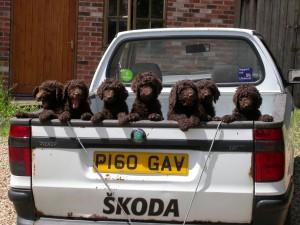 pet care, dogs, mornington peninsula, dog drive-in