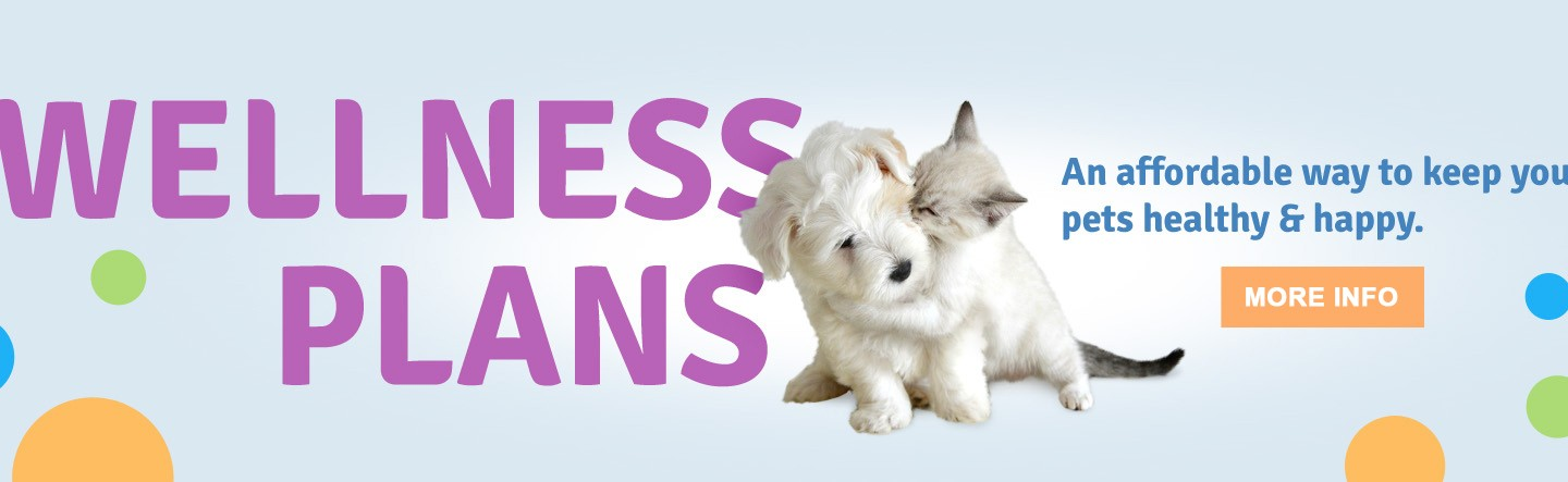 wellness plan, pet hospital care Frankston, pet surgical care Frankston,