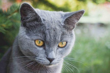 cat desexing melbourne, desex cat, cat desexed melbourne, pet care, animal hospital, vet hospital,