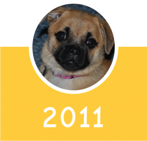 2011 Icon