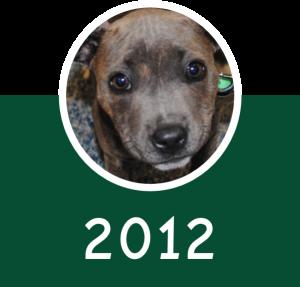 2012 Icon