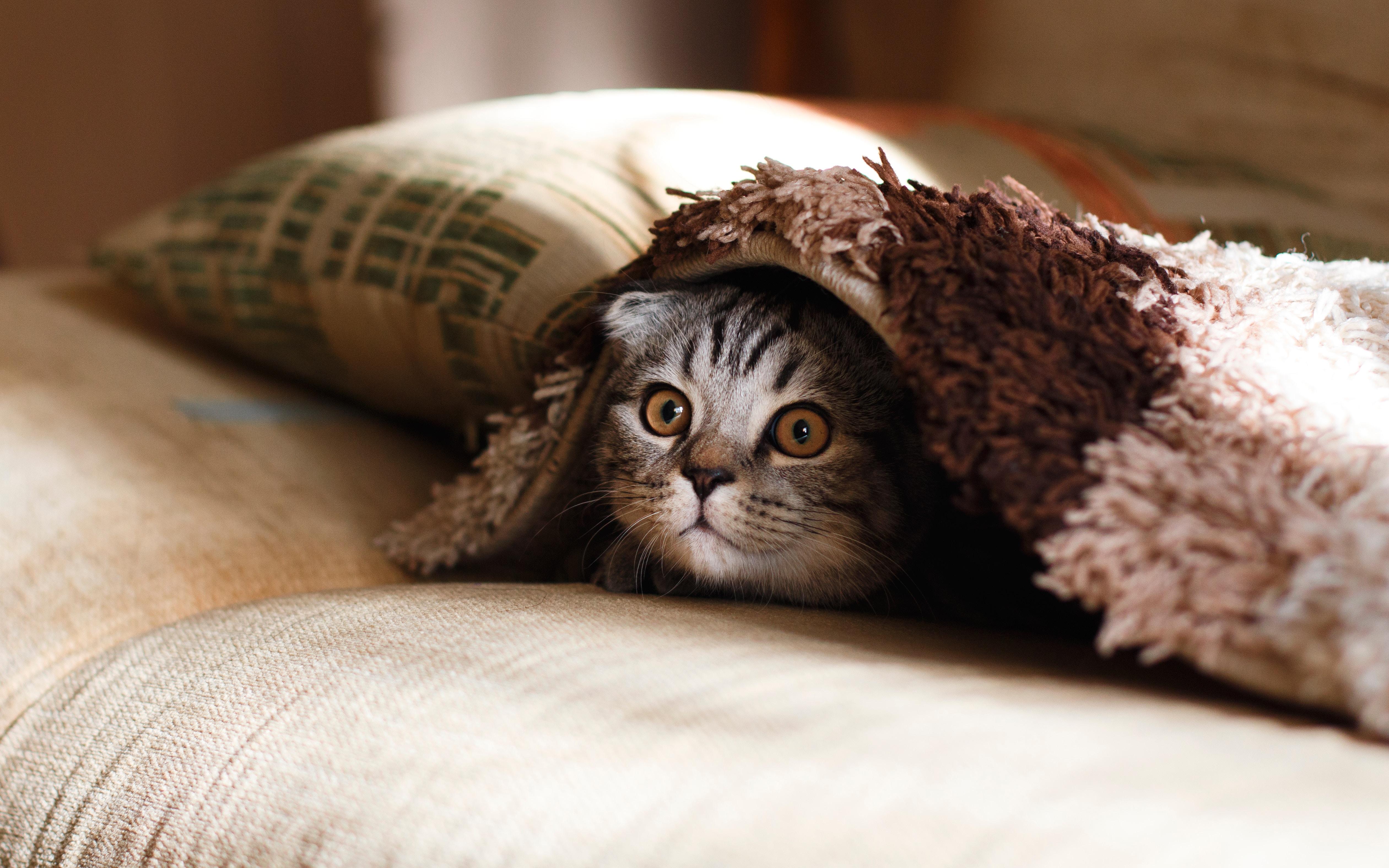 cat vaccination, how to destress a cat, langwarrin vet clinic, vet clinic mornington peninsula, frankston vet, seaford vet, stress relief for cats, nervous cat, scared kitten, calming cat, cats anxiety