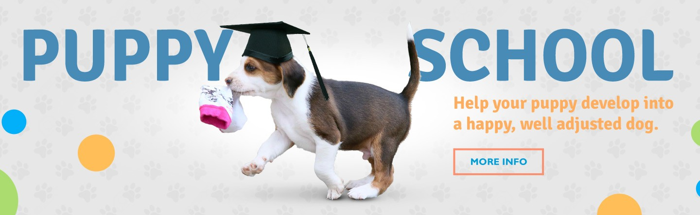 puppy school frankston, puppy school melbourne, dog training, vet clinic somerville,