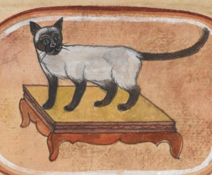 siamese cat care, treatise on cats
