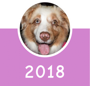 Puppy_School_2018