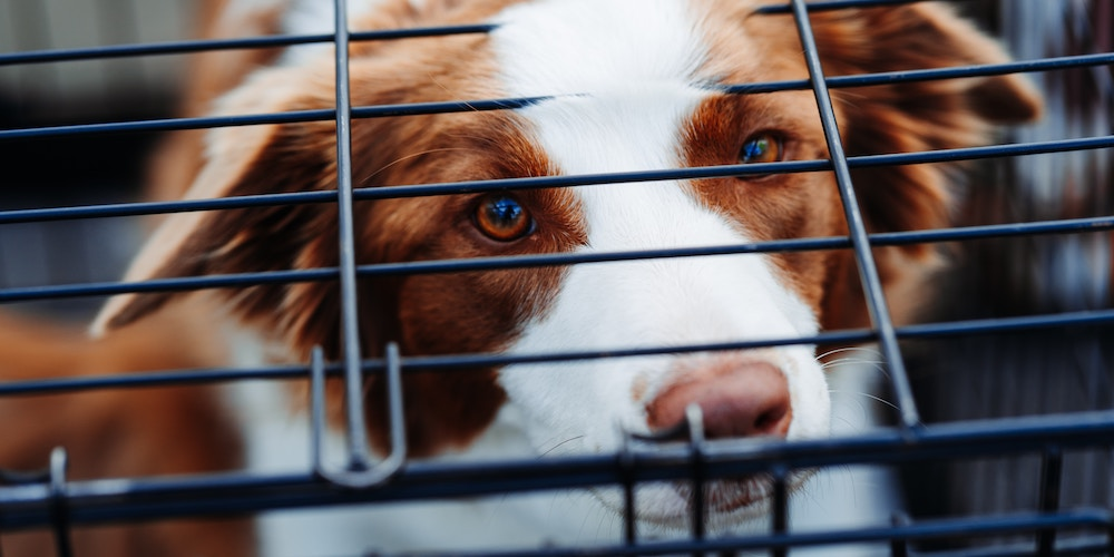 prepare your dog for a flight, dog in crate
