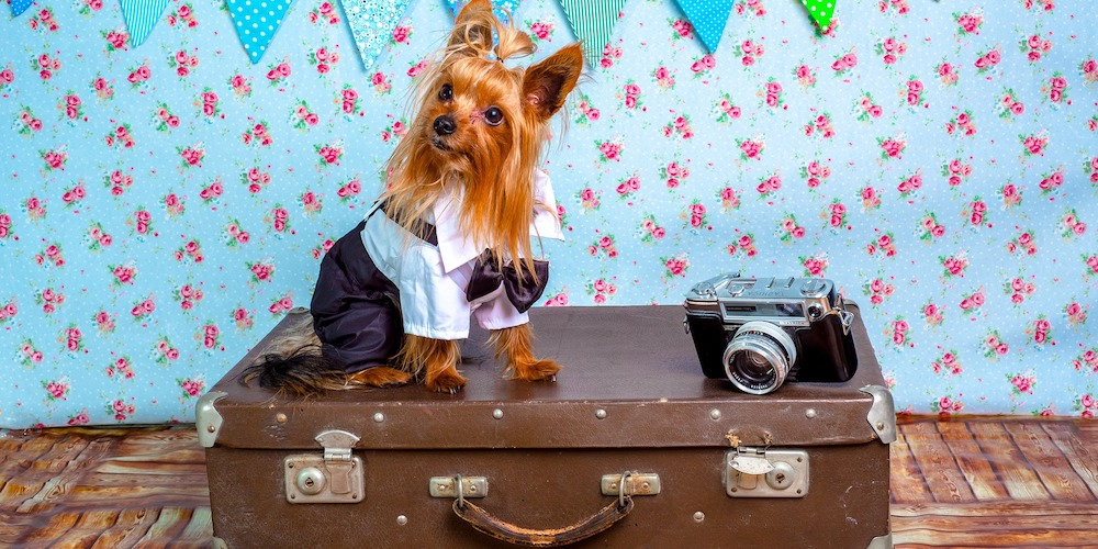 prepare your dog for a flight, dog on suitcase