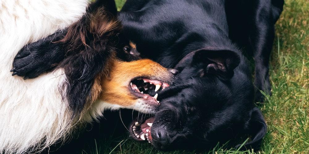 vet clinic on the mornington peninsula, dog attacks
