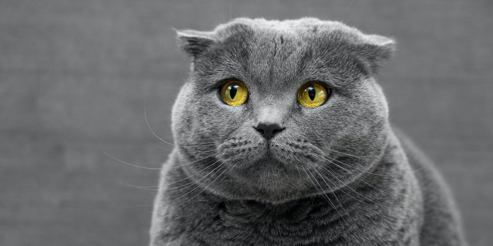 5 signs your cat is stressed
