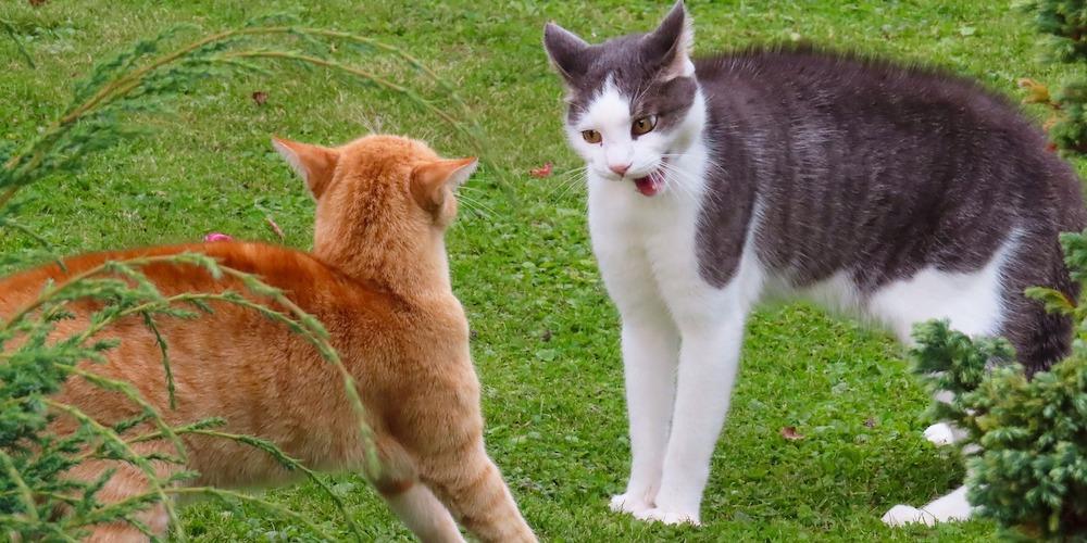 cat fights & cat bites